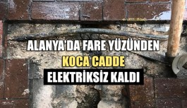 Alanya'da fare yüzünden koca cadde elektriksiz kaldı