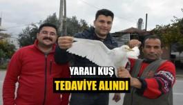 Yaralı kuş tedaviye alındı