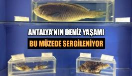 Antalya'nın deniz yaşamı bu müzede sergileniyor