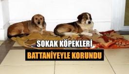Sokak köpekleri battaniyeyle korundu
