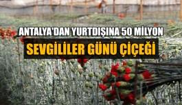 Antalya'dan 20 ülkeye 50 milyon 'Sevgililer Günü' çiçeği