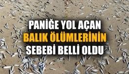 Paniğe yol açan balık ölümlerinin sebebi belli oldu