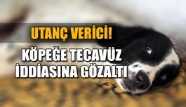 Utanç verici! Köpeğe tecavüz iddiasına gözaltı