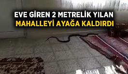 Eve giren 2 metrelik yılan mahalleyi ayağa kaldırdı