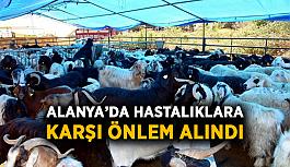 Alanya'da hastalıklara karşı önlem alındı