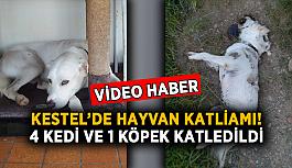 Kestel'de hayvan katliamı! 4 kedi ve 1 köpek zehirlendi