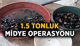 1.5 tonluk midye operasyonu