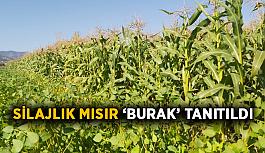 Silajlık mısır BURAK tanıtıldı