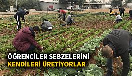 Öğrenciler sebzelerini kendileri üretiyorlar