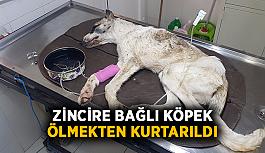 Zincire bağlı köpek ölmekten kurtarıldı