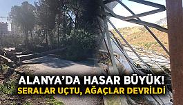Alanya'da hasar büyük! Seralar uçtu, ağaçlar devrildi