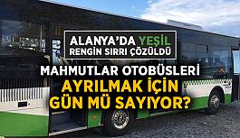 Alanya'da yeşil rengin sırrı çözüldü! Mahmutlar otobüsleri ayrılmak için gün mü sayıyor?