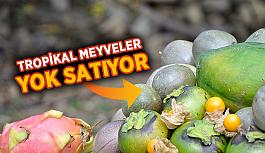 Tropikal meyveler yok satıyor