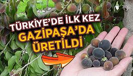 Türkiye'de ilk kez Gazipaşa'da üretildi