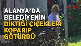 Alanya'da belediyenin diktiği çiçekleri koparıp götürdü