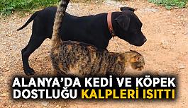 Alanya'da kedi ve köpek dostluğu kalpleri ısıttı