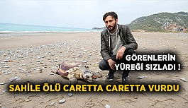 Görenlerin yüreği sızladı!  Sahile ölü caretta caretta vurdu
