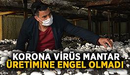 Korona virüs mantar üretimine engel olmadı