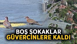 Sokaklar güvercinlere kaldı