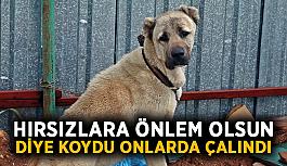 Hırsızlara önlem olsun diye koyduğu köpekler çalındı