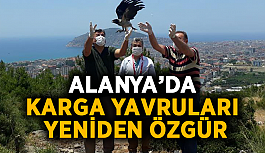 Alanya'da karga yavruları yeniden özgür