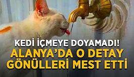 Kedi içmeye doyamadı! Alanya'da o detay gönülleri mest etti