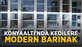 Konyaaltı'nda kedilere modern barınak