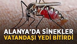 Alanya'da sinekler vatandaşı yedi bitirdi