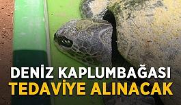 Deniz kaplumbağası tedaviye alınacak