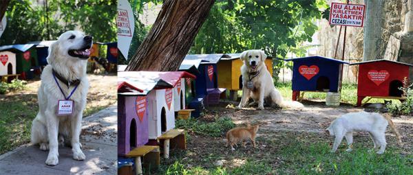 Turizm elçisi kedileri, köpek  'Aras' koruyor