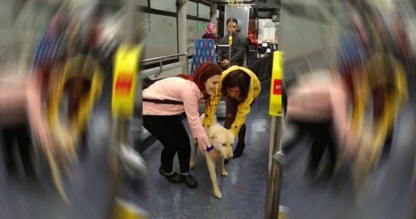 Yağmurdan kaçan sokak köpeği otobüse sığındı