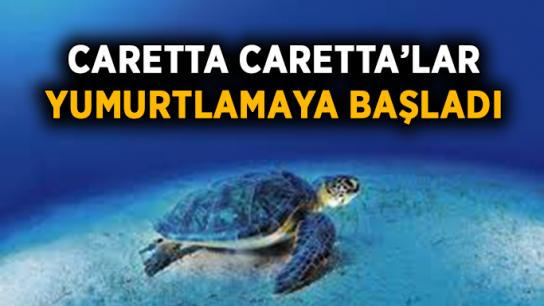 'Caretta Caretta'lar yumurtlamaya başladı