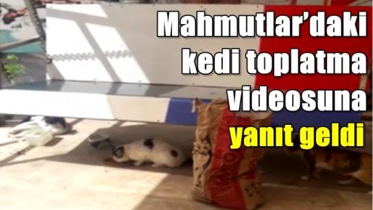 Mahmutlar'daki kedi toplatma videosuna yanıt geldi