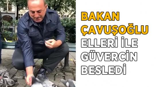Bakan Çavuşoğlu elleri ile güvercin besledi