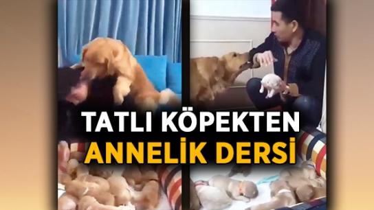 Tatlı köpekten annelik dersi