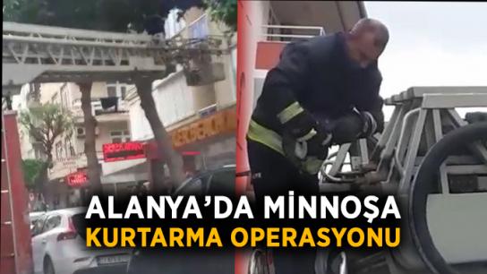 Alanya'da minnoşa kurtarma operasyonu