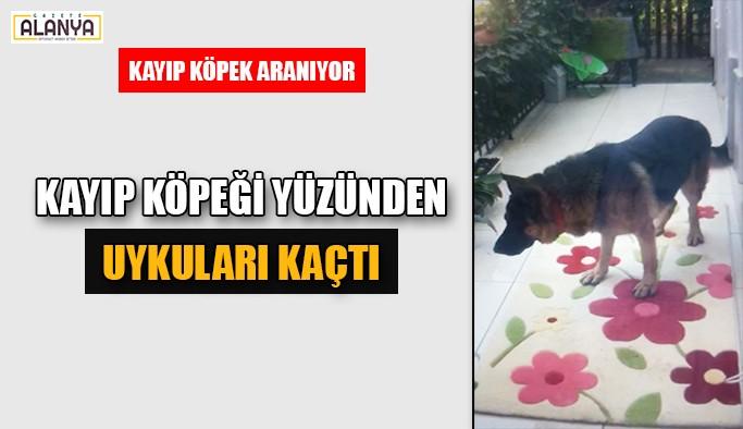 Kayıp köpeği yüzünden uykuları kaçtı