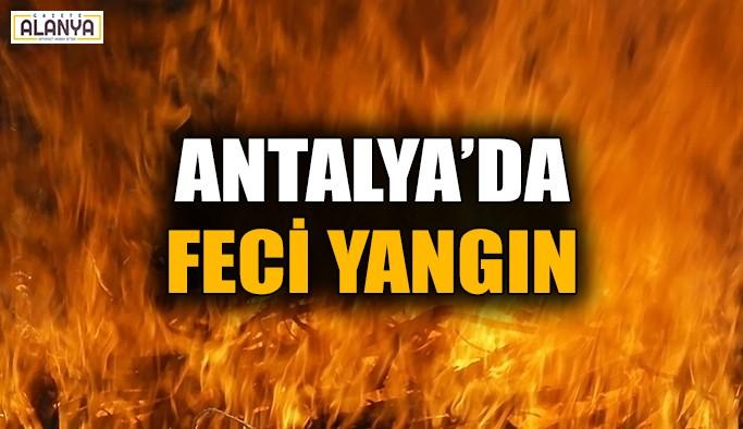 Antalya'da feci yangın