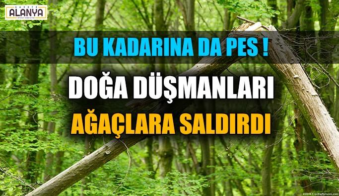 Doğa düşmanları ağaçlara saldırdı