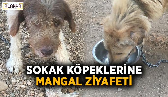 Sokak köpeklerine mangal ziyafeti