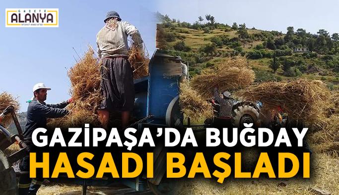 Gazipaşa'da buğday hasadı başladı
