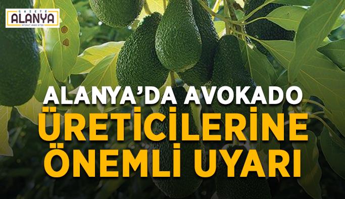 Alanya'da avokado üreticilerine önemli uyarı