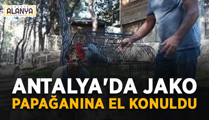 Antalya'da Jako papağanına el konuldu
