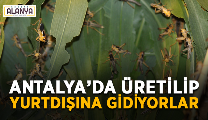 Antalya'da üretilip yurtdışına gidiyorlar