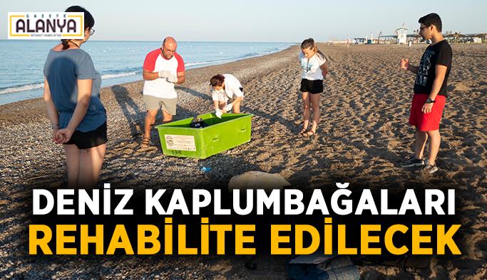 Deniz kaplumbağaları rehabilite edilecek