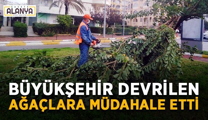 Büyükşehir devrilen ağaçlara müdahale etti