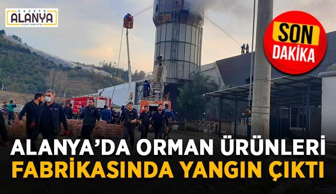 SON DAKİKA! Alanya'da bir fabrikada yangın çıktı