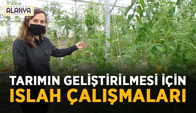 Tarımın geliştirilmesi için ıslah çalışmaları