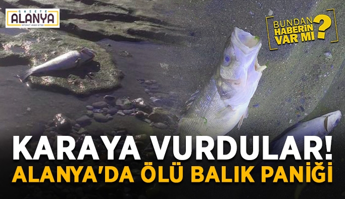Karaya vurdular! Alanya'da ölü balık alarmı