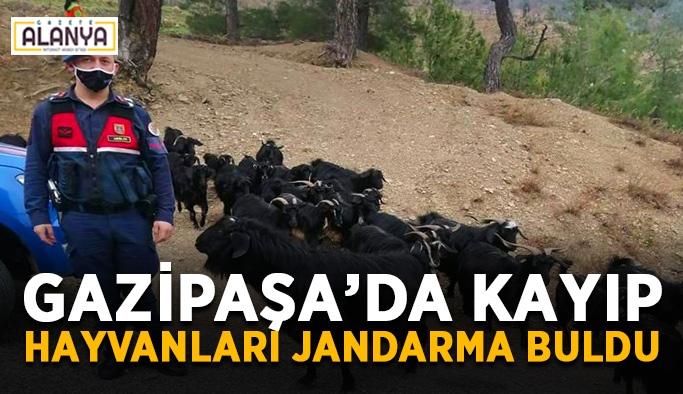 Gazipaşa'da kayıp hayvanları jandarma buldu